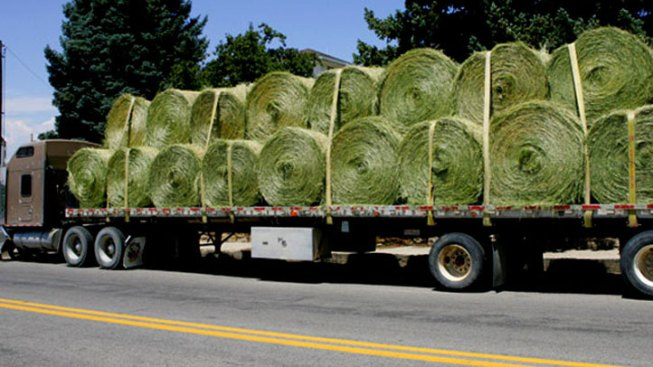 Drought, High Demand Makes Hay Hard to Find