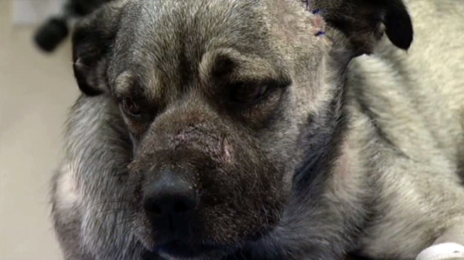 Parker County Family Adopts Tortured Dog