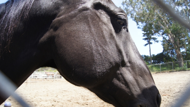 Oak Cliff Man Finds Another Sexually Assaulting Horse