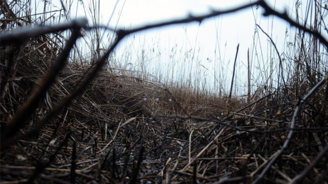 Marsh Fire Extinguished in Southeast Texas