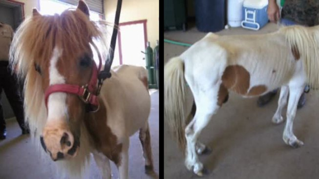 North Texas Men Charged With Neglecting Pony