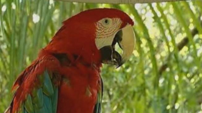 Burglars Hit Austin Zoo Gift Shop, Office
