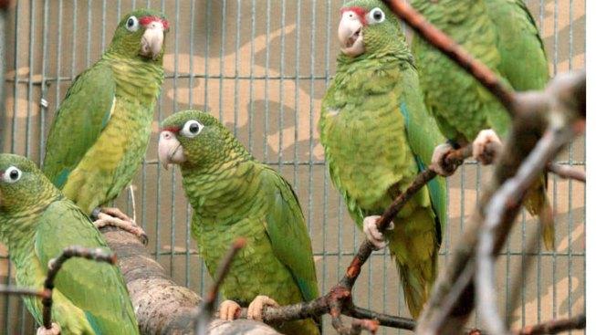 Pot, Parrot Seized at Border