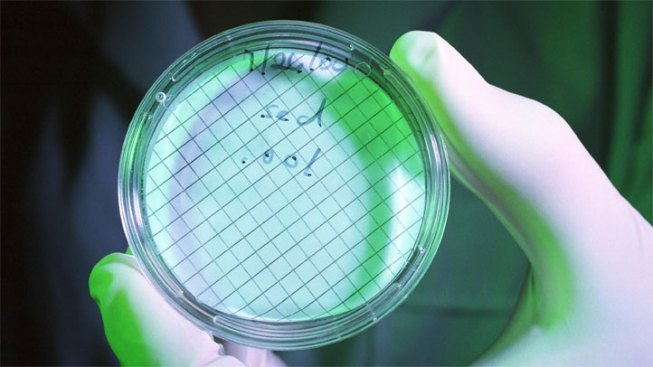 Flesh-Eating Bacteria Killed Texas Boy in Calif.