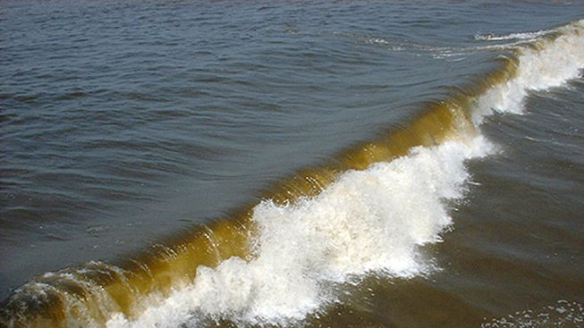 Nearly 1 Million Fish Die in Texas Red Tide