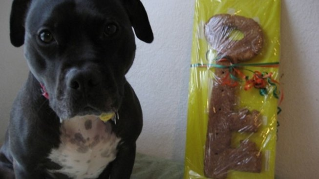 Vick's Dog Gets Edible Key to Dallas
