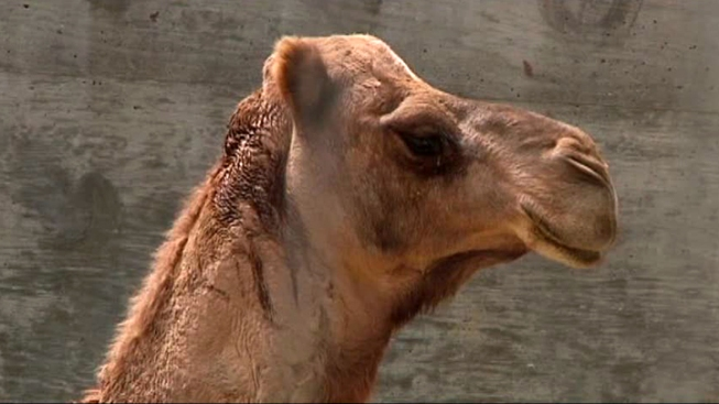 Humane Society Gets Exotic Animal