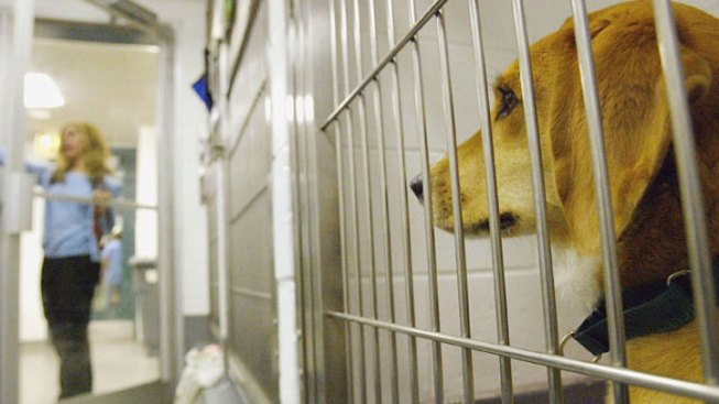 Sixty Dogs Euthanized After Contracting Parvo