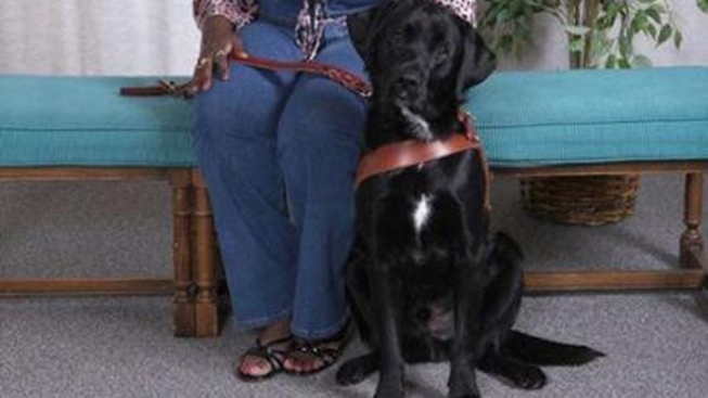 Missing Guide Dog Reunited With Blind Woman