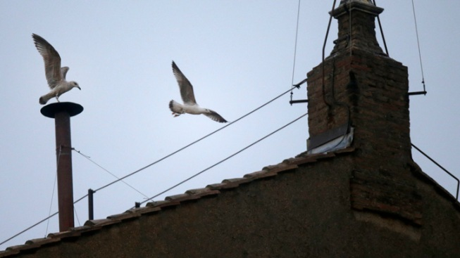 Sistine Seagull: A Smoke Cam Star