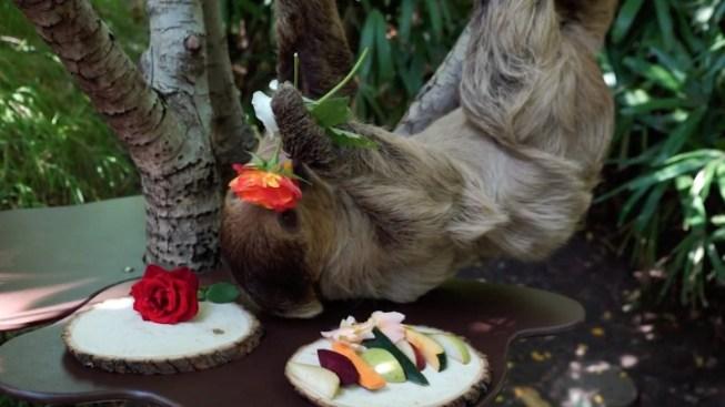 Sip a Beer a Sloth Helped Create, at LA Zoo