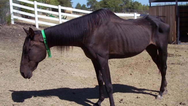 Starving Horses, Donkeys Seized in Kaufman County