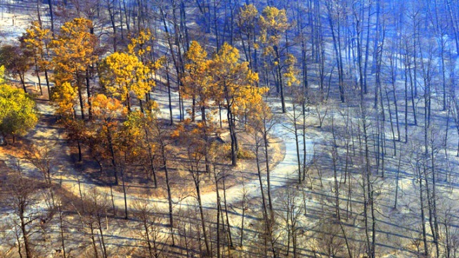 Volunteers Restoring Texas Forests Destroyed by Fires