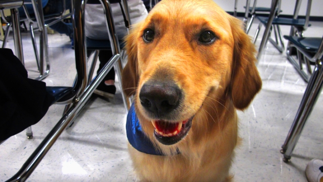 Therapy Dogs Help Students at Some Texas Schools