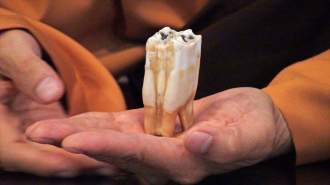 "Followers Claim Rare ""Buddha's Tooth"" With Healing Powers Continues to Grow"