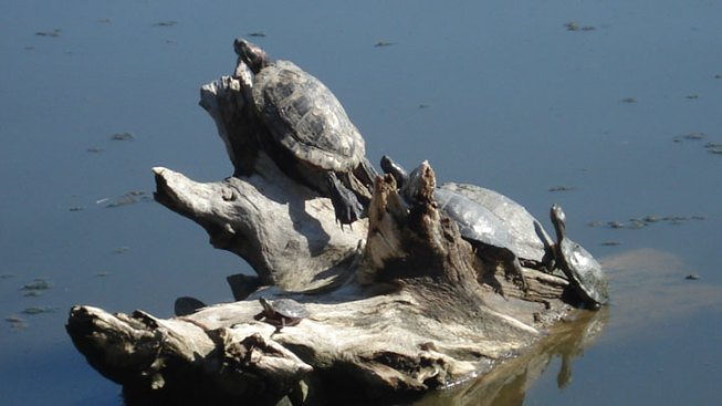TurtlePalooza Saturday at Trinity Audubon Center