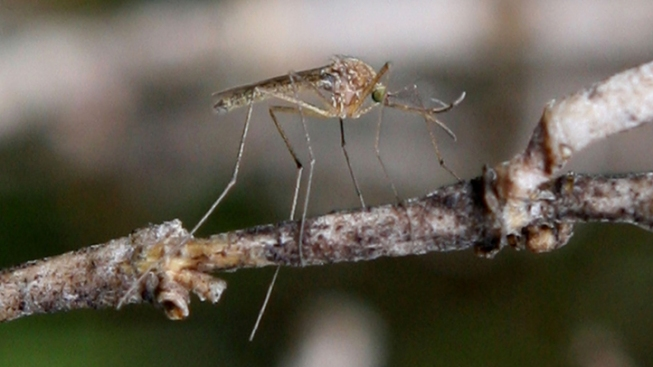 Denton Confirms 3 New West Nile Cases