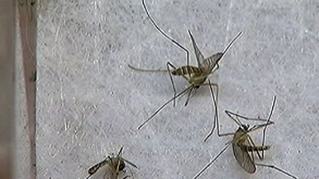 Denton Co. Man Infected with West Nile Dies