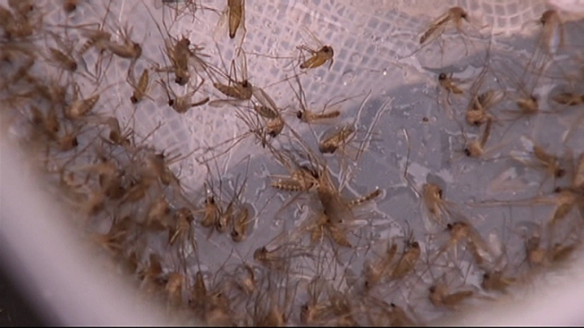 Dallas Confirms 2nd Human Case of West Nile Virus