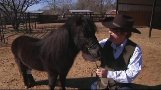 Midnite, a miniature horse who received a prosthetic leg, is inspiring others who are missing limbs.