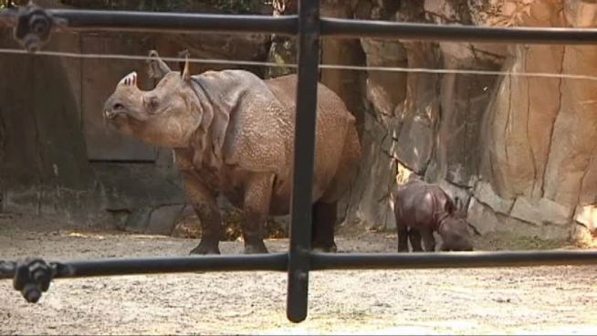 The Fort Worth Zoo needs help naming an endangered baby rhino.