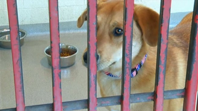 Collin County Animal Services says it's overrun with unwanted pets and through a private partnership will start Project S.N.Y.P. or Spay and Neuter Your Pups in an effort to reduce the dog and puppy population over the next two years.