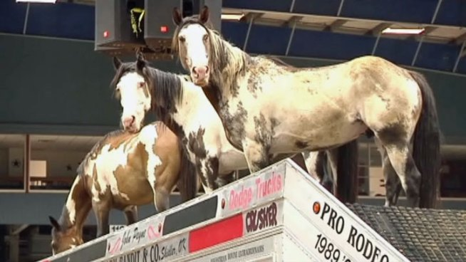 The Mesquite Rodeo will showcase the One-Arm-Bandit Company this weekend which is founded by a cowboy with one arm.