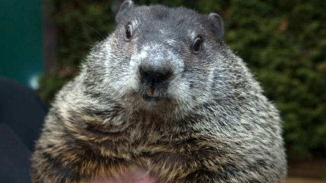 Punxsutawney Phil Says 6 More Weeks of Winter