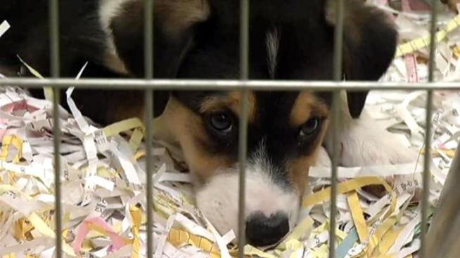 Operation Kindness will help place more than a dozen of the dogs rescued from an alleged puppy mill in Kaufman County.