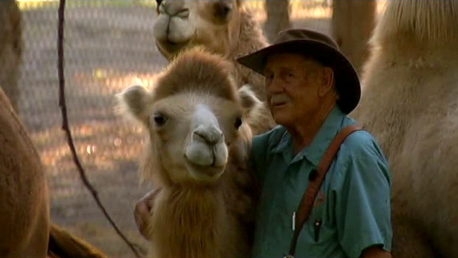 A North Texas camel farm is benefiting from the popularity of Geico's