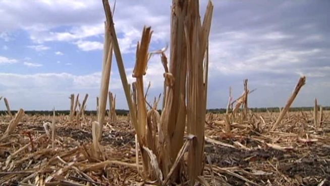 Texas 2011 Drought Deemed 'Most Costly'
