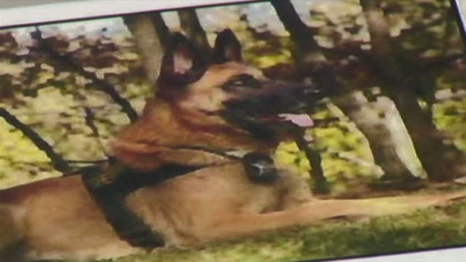 A landowner worried about his livestock shot and killed a dog, not knowing it was a K-9 missing from the Denton County's Sheriff's Office.
