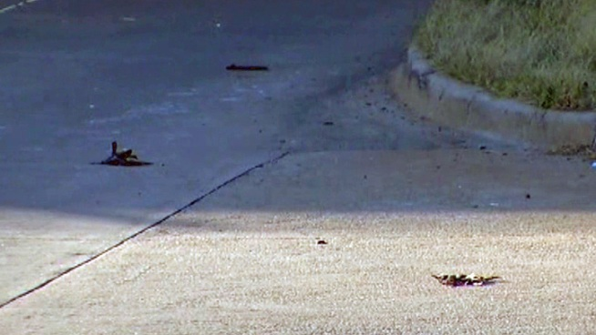 NBC 5 viewer alerts us to dozens of birds killed at a busy Collin County interchange.