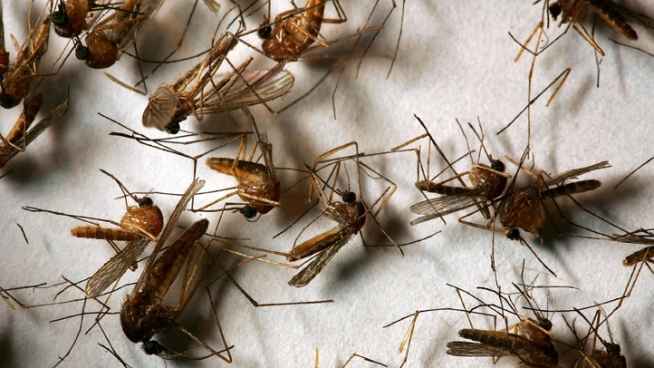 A group of doctors is recommending Dallas County fight West Nile virus with aerial spraying for mosquitoes.