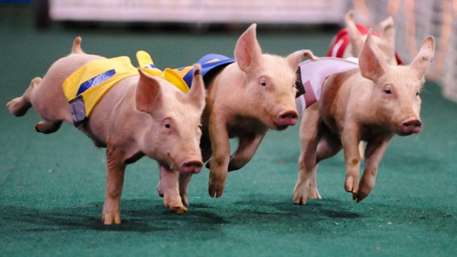 CMC Warns of Swine Flu Threat at State Fair