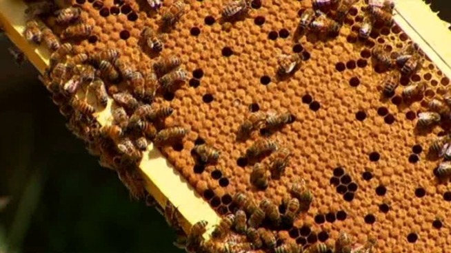 Beekeepers Worried About Aerial Spraying