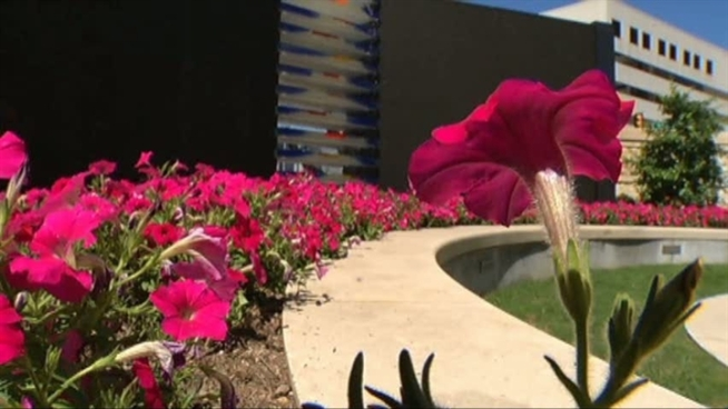 Baylor Cancer Society in Dallas has built a healing garden to help patients and family members dealing with illness.