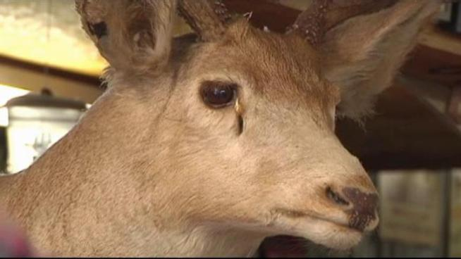 Hunters fear hot temperatures, drought and wildfires may have changed the habitats of deer.