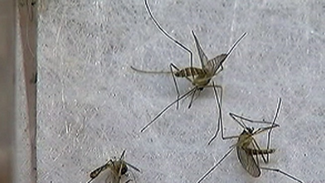 West Nile Concerns Lead to Flood of Phone Calls