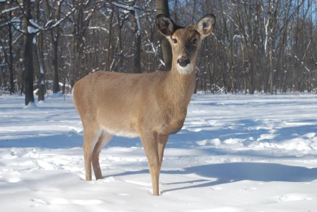 30 Feet of Deer Carcasses Found on Property