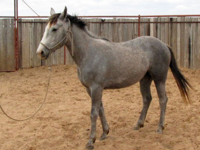 Military Family's Horse Stolen from Field