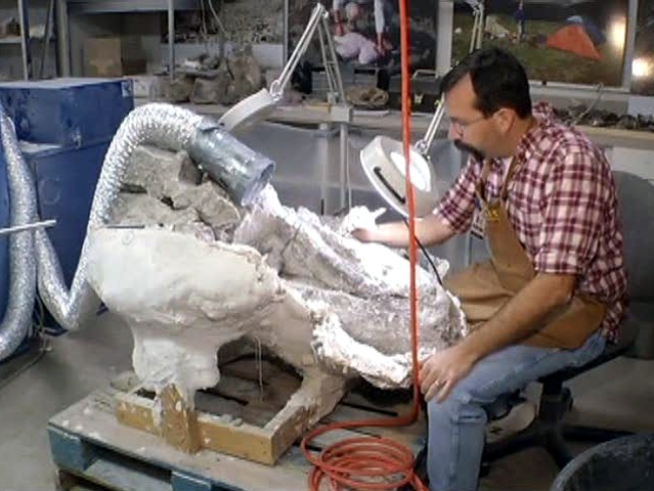 Never-before-seen dinosaur fossils will go on exhibit when the <a title=