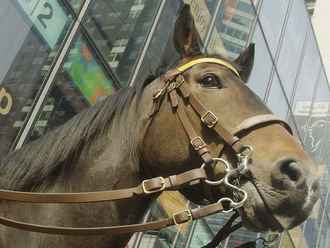 Lollapaloozer Charged After Punching Officer's Horse