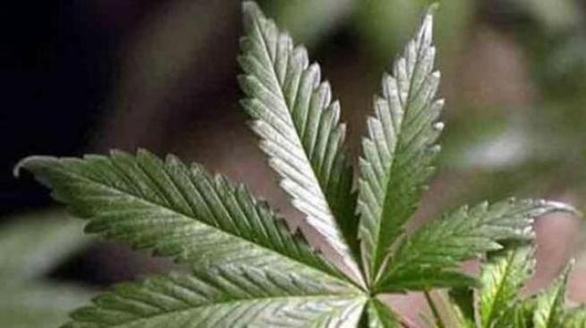 Gov. Perry Defends State's Right to Legalize Marijuana