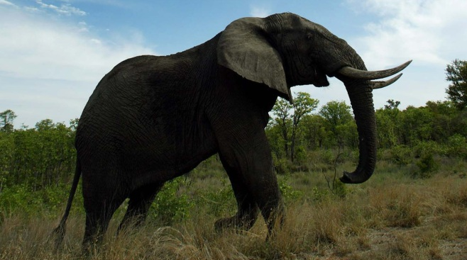 Land Grabs Threaten Africa's Last Bastions for Elephants