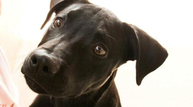 Adoption Special for Black Dogs, Cats
