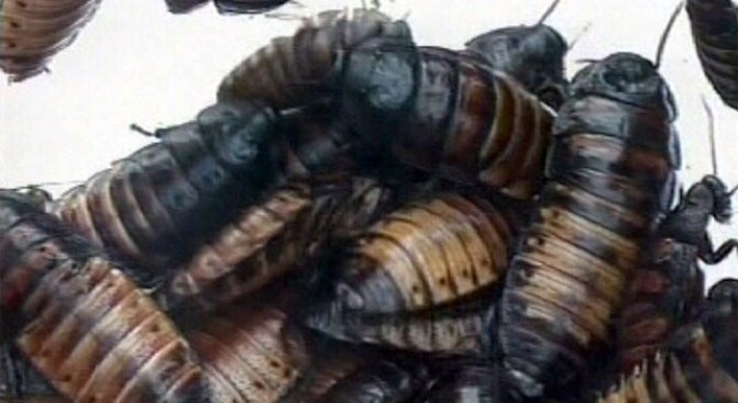 Disgusting! Police Find Kids Covered in Roaches