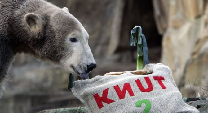 Bear Clause: German Zoos in Legal Fight Over Knut