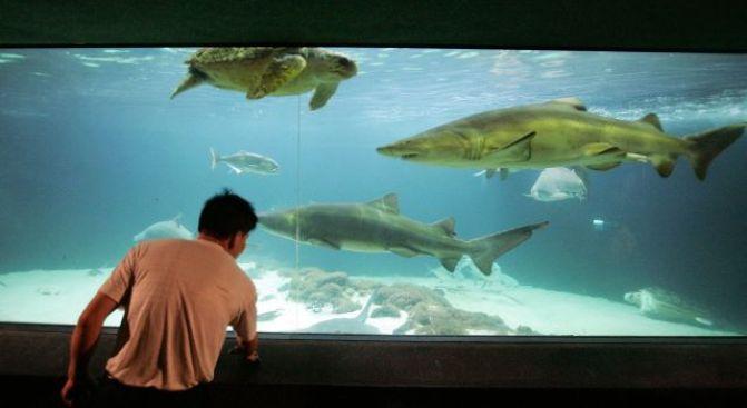 Shark Bellies Yield Smuggled Cocaine