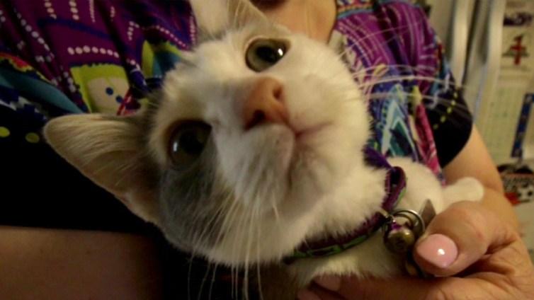 Corinth Woman Gets Sick Cat After Pet Adoption